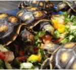 Information About Feeding My Horsefield Tortoise