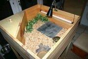 horsefield tortoise wood table